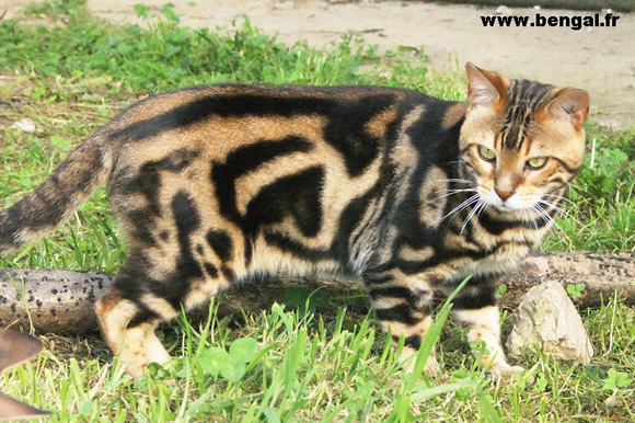 chat meurthe et moselle